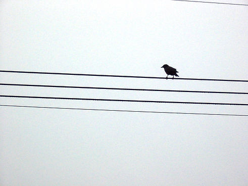 Zehra - Bird on a Wire by Chris Campbell