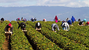 (Max) veronica alfaro MAC18_FARM-WORKERS