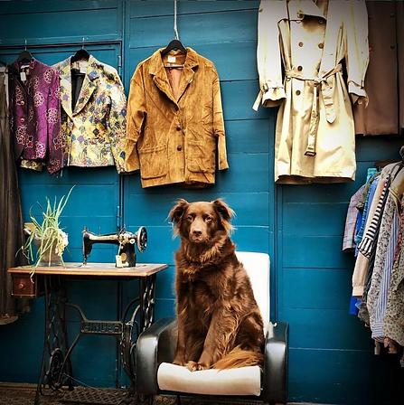 Guinness, le chien mascotte de la boutique posant devant des articles de la friperie