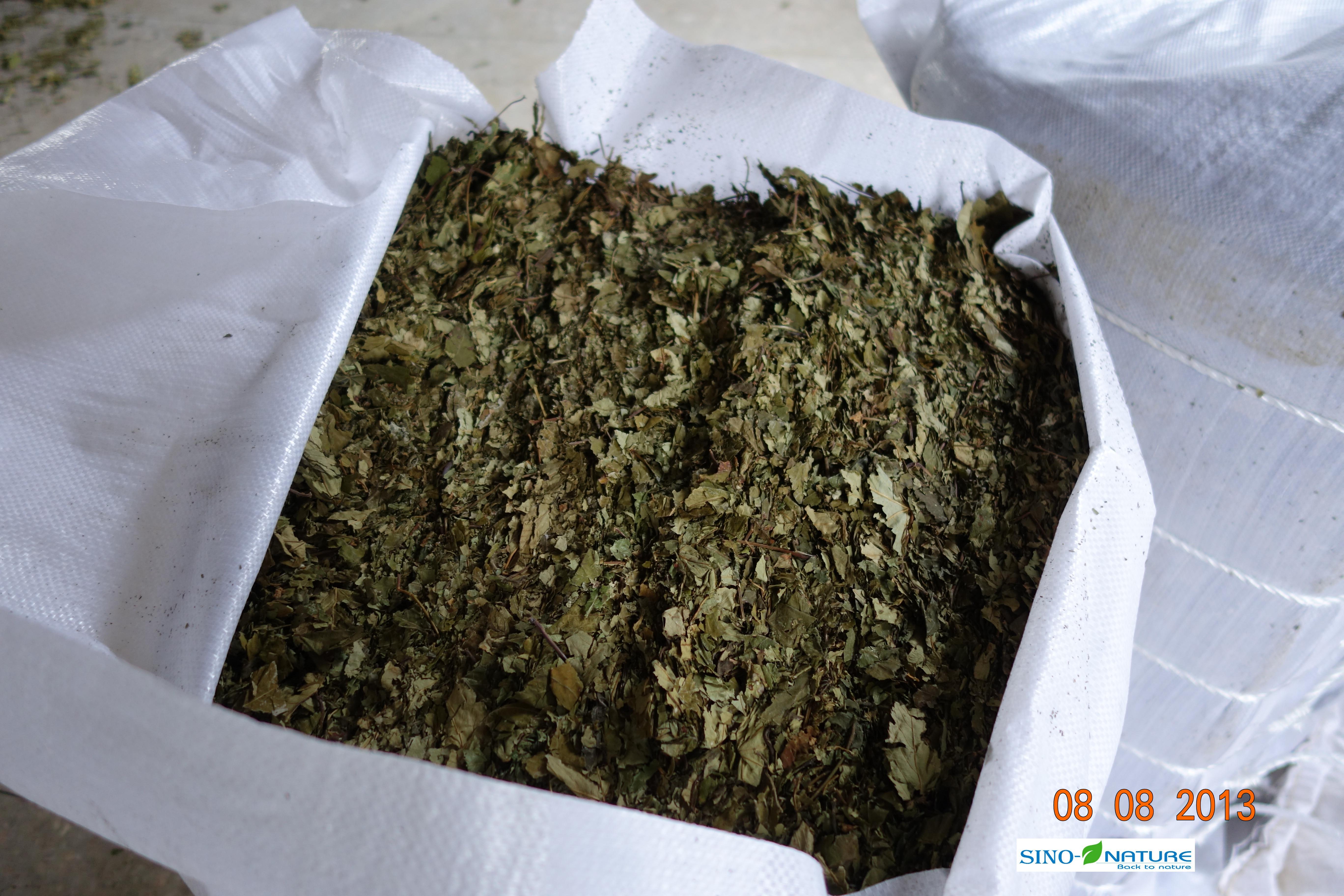 Blackberry leaves in pressed bales