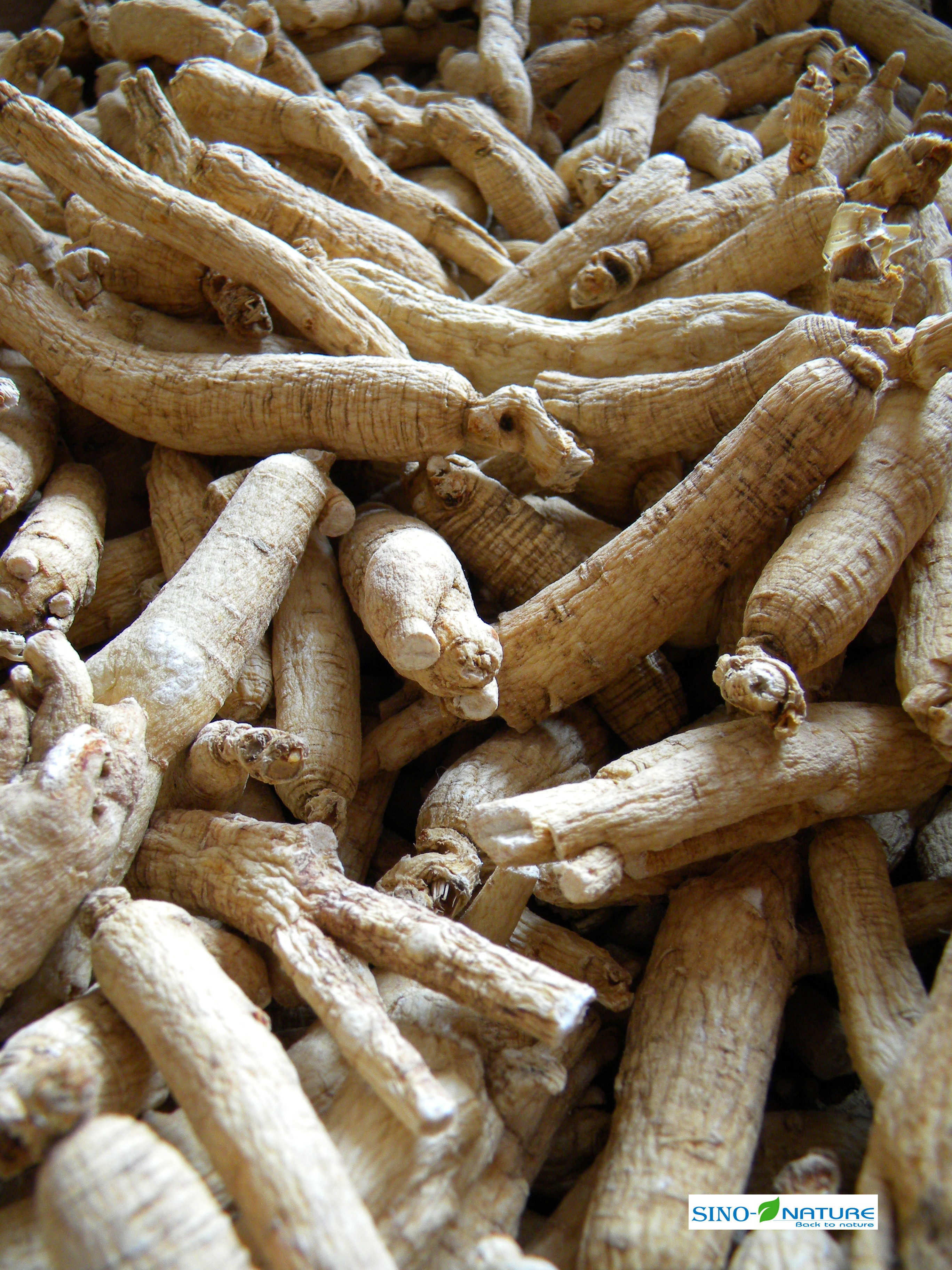 Ginseng white whole