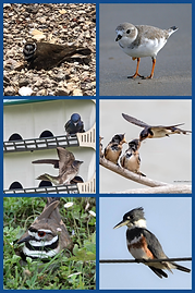 bird collage.png