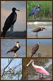 Surfsode Birds 2.png