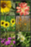 wildflower collage.png