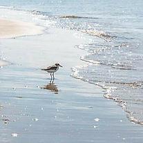 shore bird 2.jpg