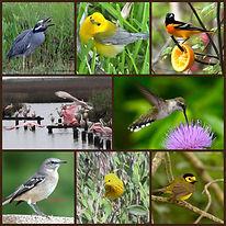Surfside Birds 3.jpg