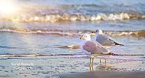 Shore birds.jpg