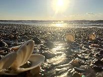 Sparkling Seashells.jpg