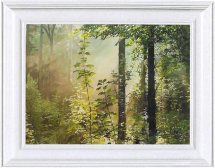 Forest Sunbeam