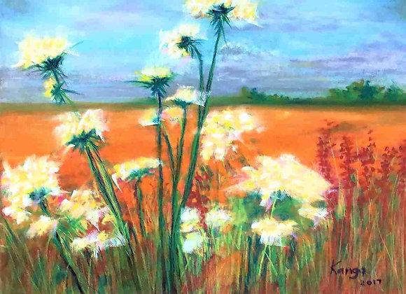 Summertime:  Field of dreams