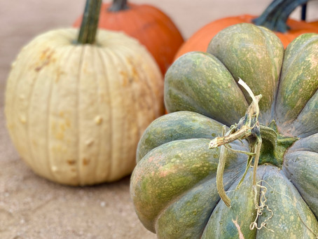 The Clearfork Farmers Market October 31st Vendor List