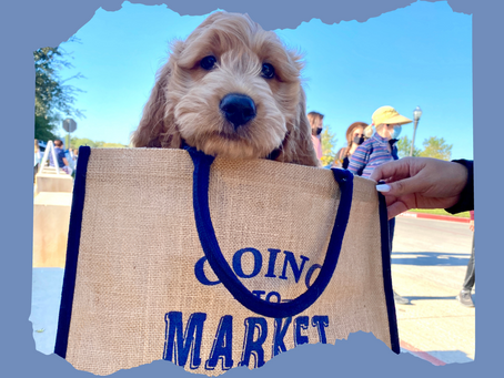 What's in Your Farmers Market Bag?