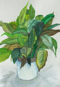 Plant Watercolour