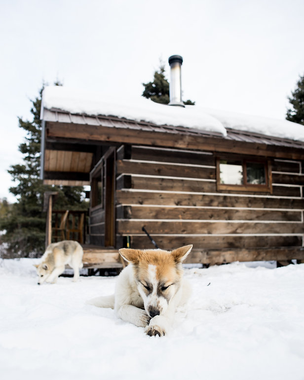 cabin whitehorse yukon winter wilderness ranch dog sledding puppies