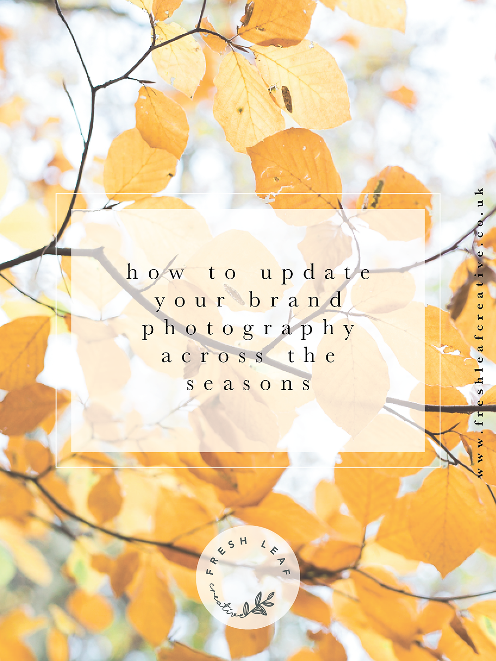 Personal Brand Photographer Surrey & SW London | Fresh Leaf Creative | Updating your personal brand photography across the seasons