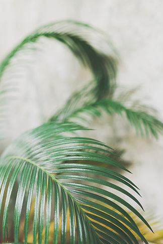Fresh Leaf Creative | Dorset Brand Photographer & Brand Identity Designer