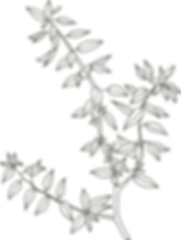 Fresh Leaf Creative | Website Design, Photography & Branding for Small Businesses & Mumpreneurs in Surrey