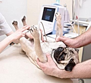 vet-Ultrasound.jpg