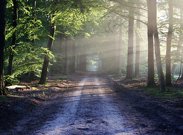 Weg_Natur.jpg