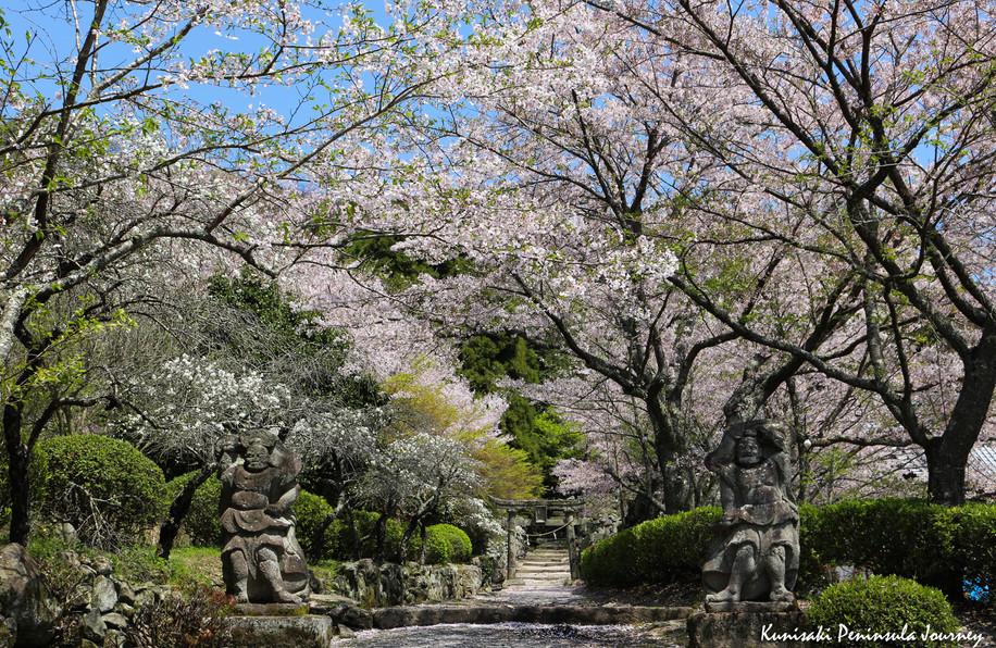 桜15.jpg