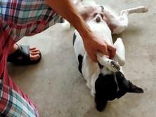 Baan reiki dog shelter-I surrender