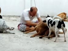 Baan reiki dog shelter-playgound