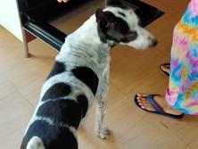 Baan reiki dog shelter-homemade dog snack