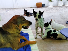 Baan reiki dog shelter-chillout
