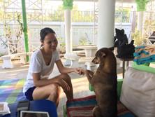 Baan reiki dog shelter-reiki share