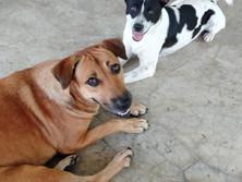 Baan reiki dog shelter-