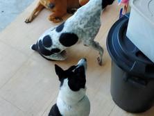 Baan reiki dog shelter-food time