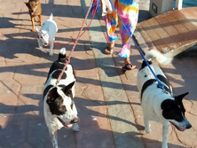 Baan reiki dog shelter - dog work