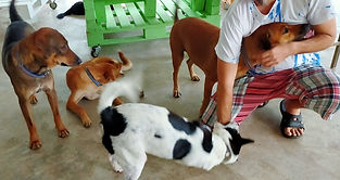Baan Reiki animals shelter