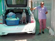 Baan reiki dog shelter-help papa work