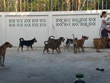 Baan reiki dog shelter-where mama go, we go