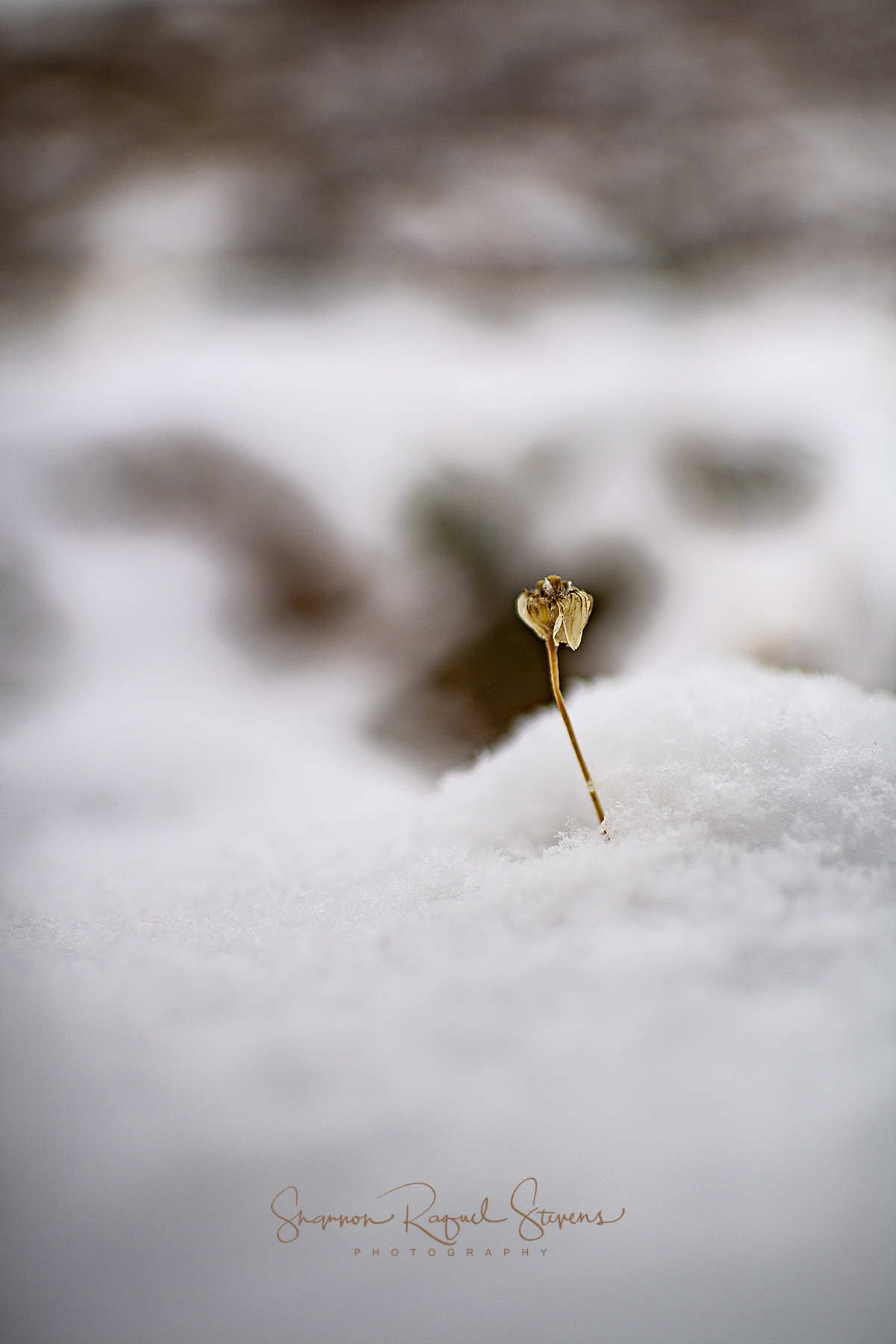 Winter Day 1