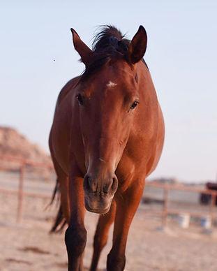 Horse Soul session