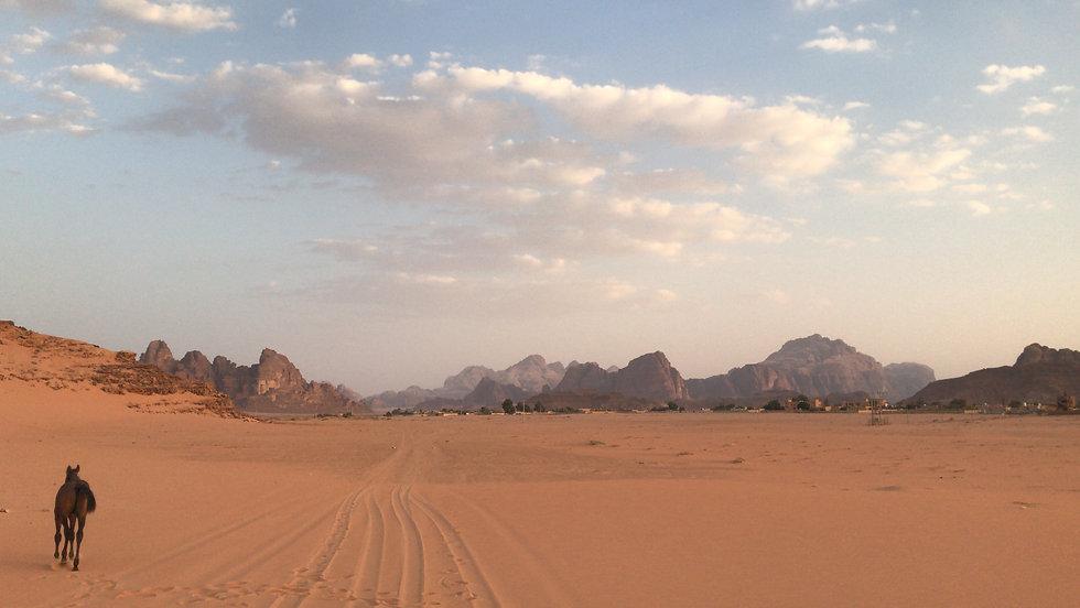 Wadi Rum desert horse