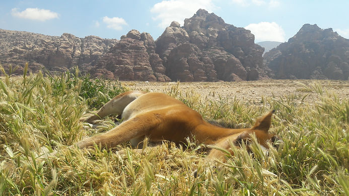 Natural horsemanship Jordan, mindfulness Jordan