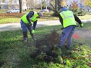Podzimní výsadba stromů v městské zeleni