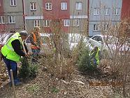 Jarní výsadba dřevin