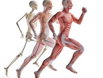 Pourquoi les sportifs adorent les soins chiropratiques...