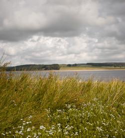 the derwent reservoir | local spots