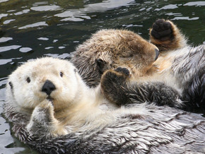 Otters! Decreasing Vulnerability