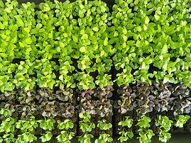 zoom plants6.jpg