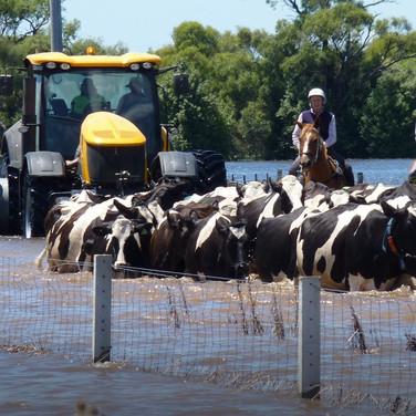Nat Geo Explorer - Australia's Great Flood