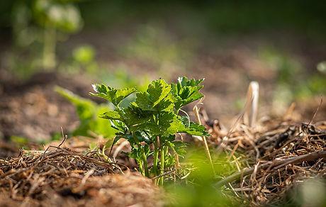 crop-4230045_640.jpg