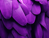 Homepage-banner-Feather (1).png