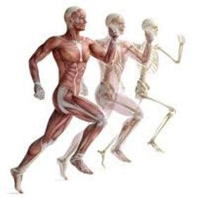 Corpo humano Corrida