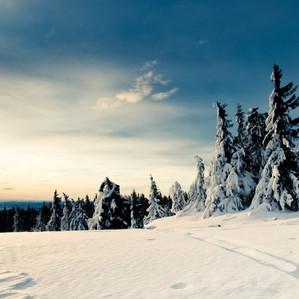 Einladung Waldweihnacht